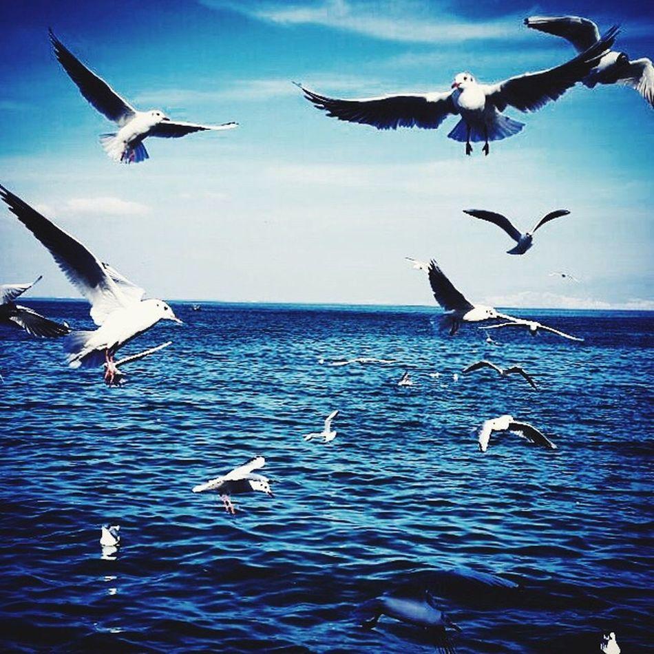 Seagulls Enjoying The Sun