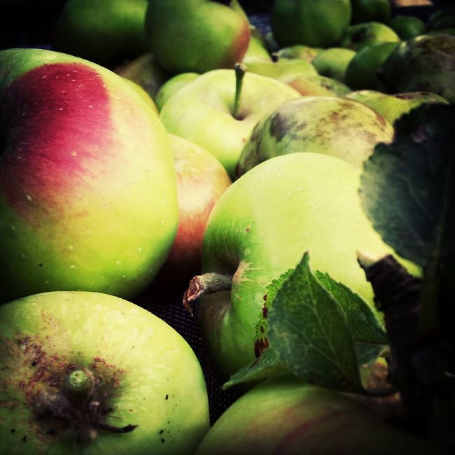 Apples in the sun. Photography Simplicity