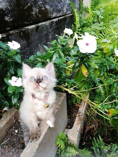 Domestic Cat No People Nature Feline