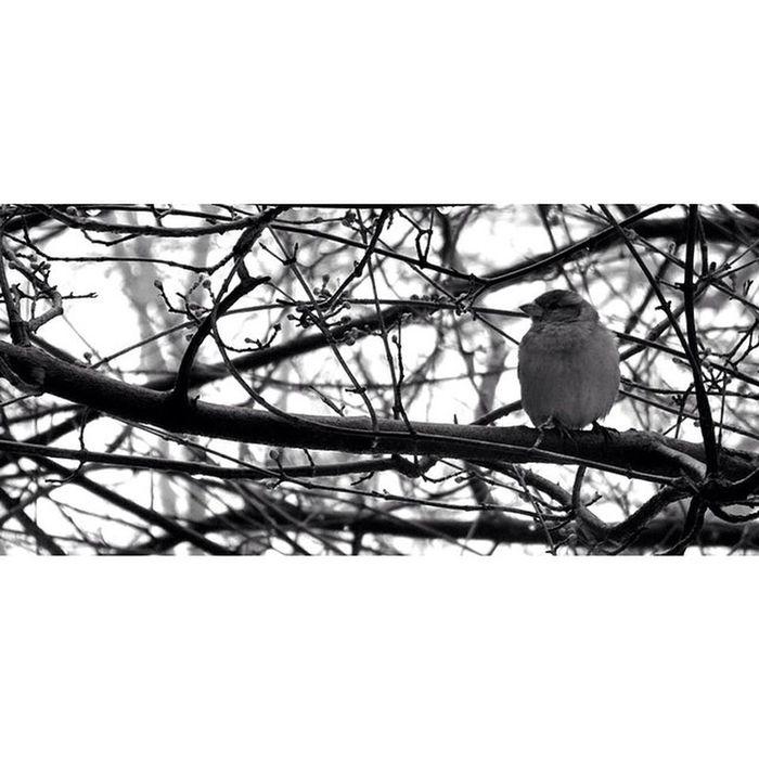 Newyork Newyorkcity NYC Sony Sonyhx50 HX50 Wildlife Snow Bird Tree Blackandwhite