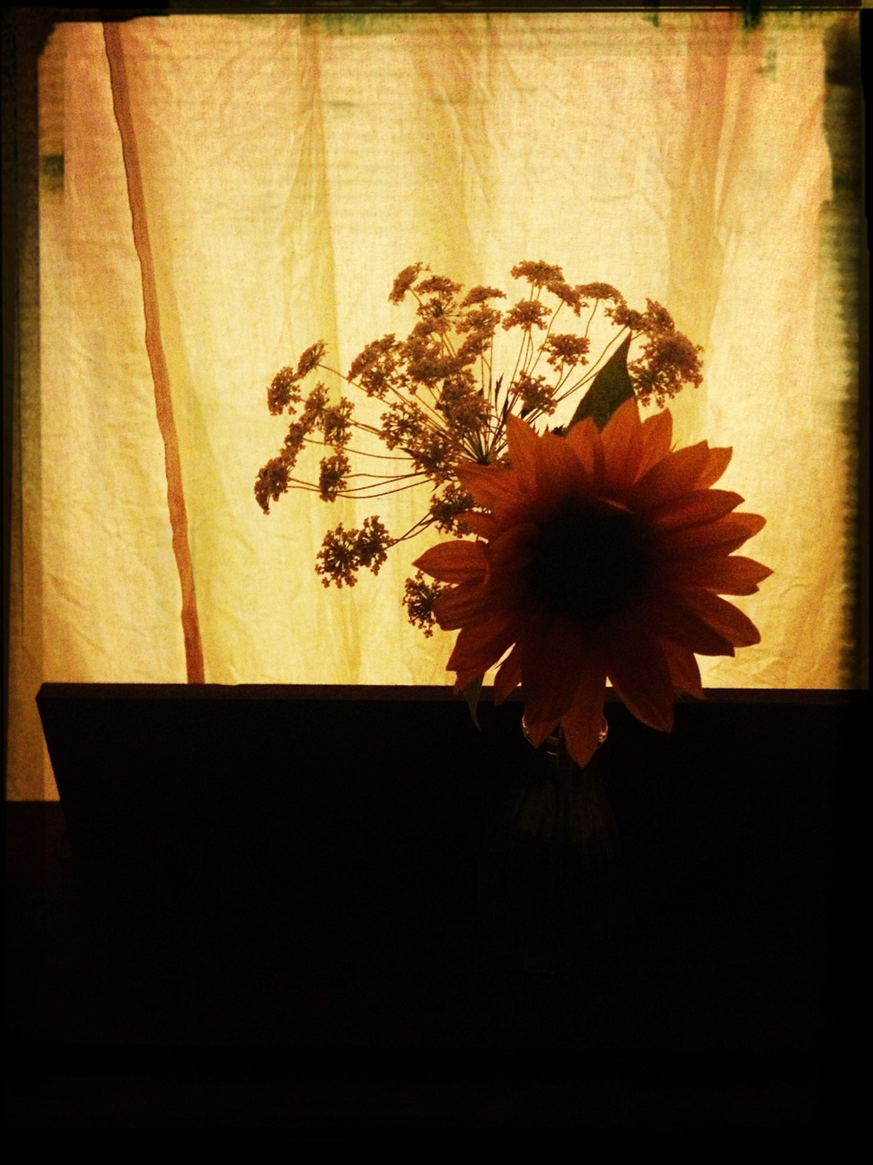 flower, indoors, flower head, petal, fragility, vase, freshness, close-up, home interior, single flower, growth, potted plant, auto post production filter, table, plant, beauty in nature, transfer print, nature, no people, pollen