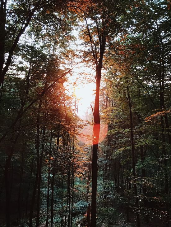 Tree Forest Tree Trunk Nature Tranquility Beauty In Nature Growth Tranquil Scene Outdoors Scenics Sun No People Branch Sunset Day Forest Fire Sky