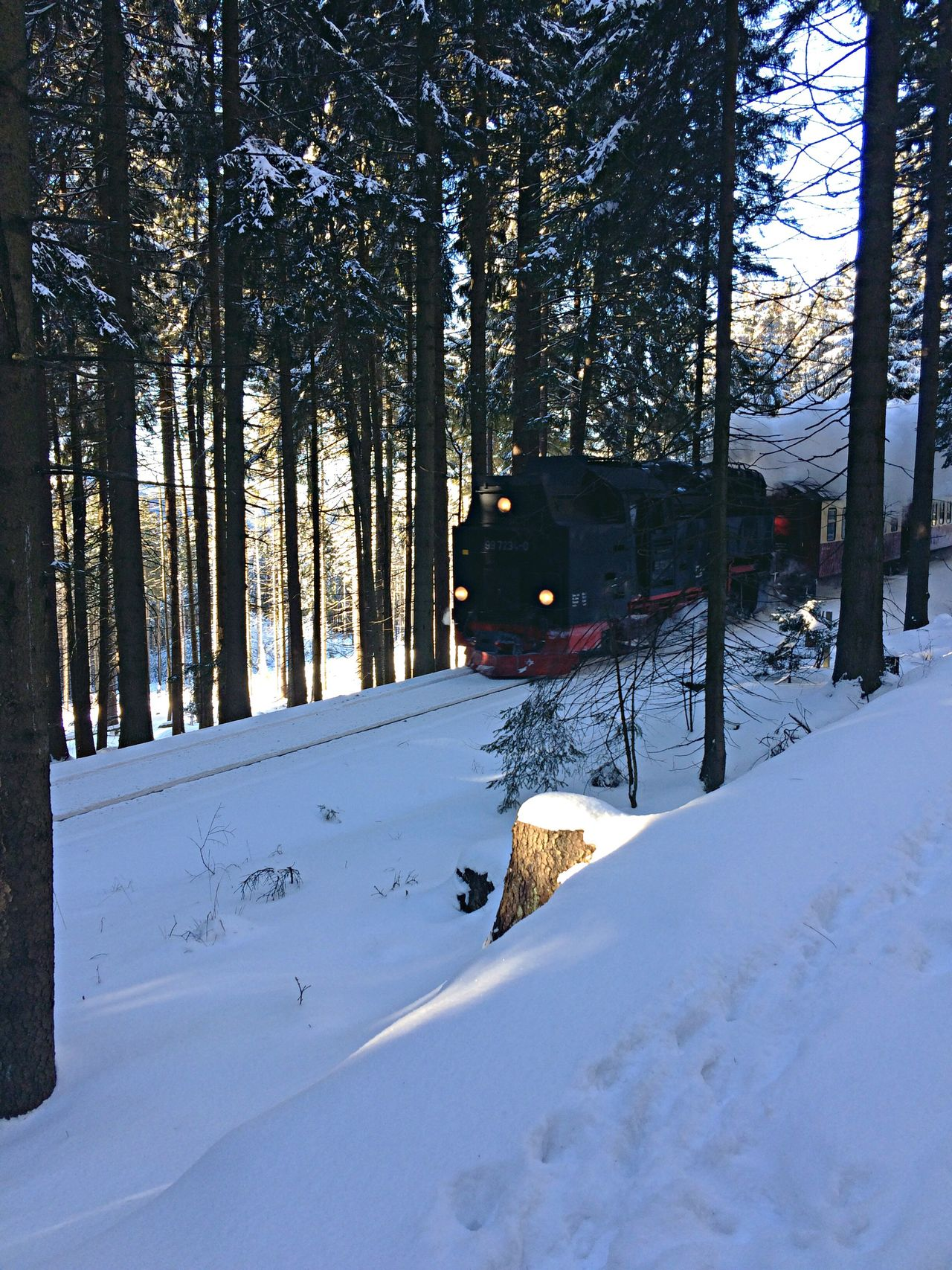 Winter Snow Cold Temperature Weather Tree Nature Outdoors Beauty In Nature Day No People Harz Dampflok Steam Train Brockenbahn Brocken