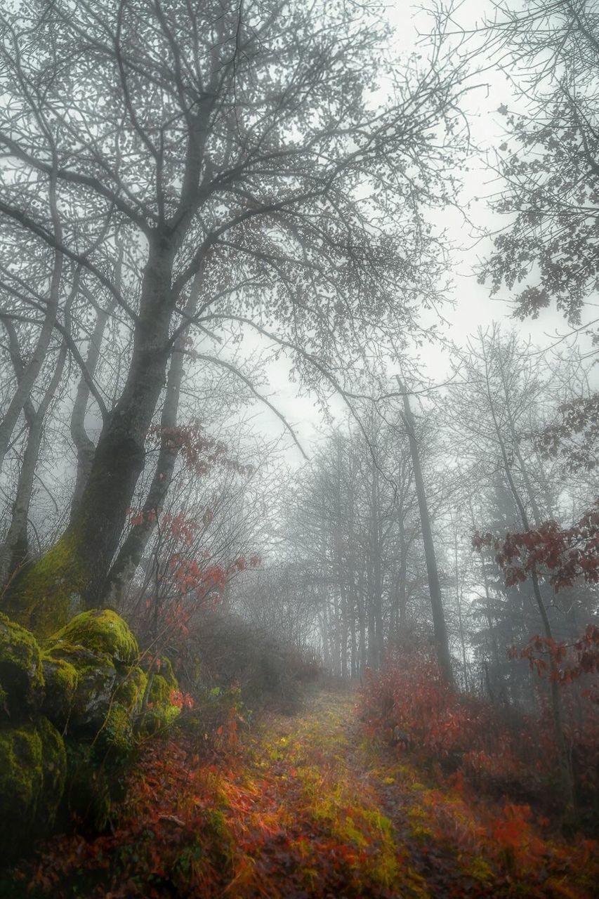 autumn, fog, tree, nature, forest, leaf, scenics, beauty in nature, tranquil scene, branch, day, no people, outdoors, tranquility, landscape, grass