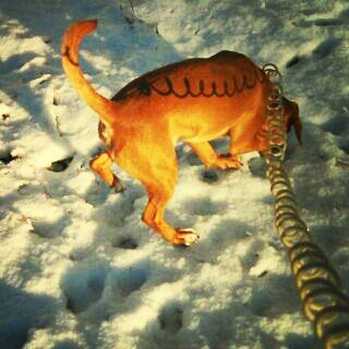 Jakey love the snow.