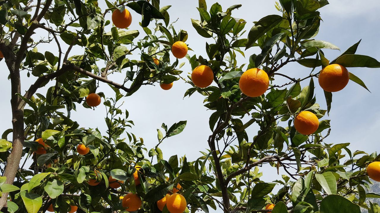 Beautiful stock photos of orange, Branch, Day, Food, Food And Drink