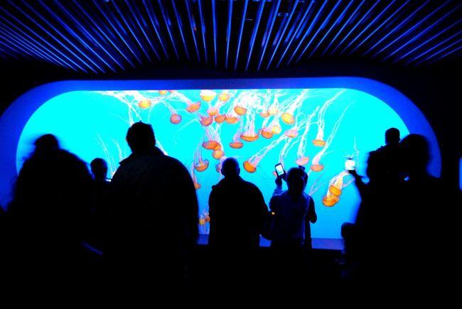 Exploration. Monterey Monterey Bay Aquarium Monterey California Jelly Fishes Jellyfish Sea Water Ocean California Tourism Vacations