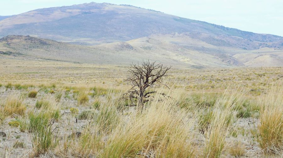 Tree Landscape Nature Tranquil Scene Scenics Tranquility Day Beauty In Nature Mountain Outdoors No People Grass Mountain Range Arid Climate Bare Tree Tree Sky
