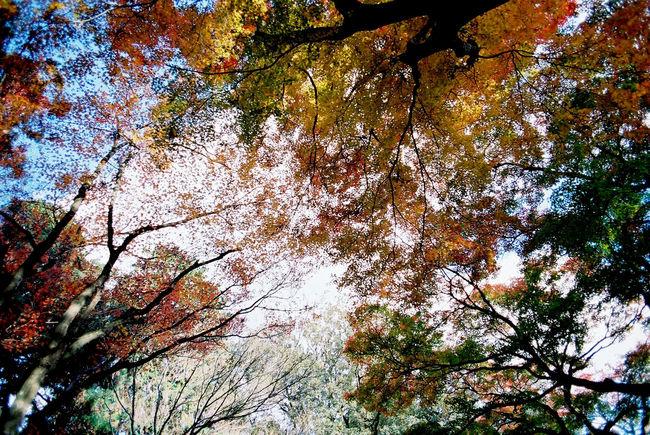 EyeEm Nature Lover Light And Shadow Film EyeEm Best Shots 35mm Film Nature Autumn Colors Fall Beauty EyeEm Japan Walking Around フィルターかけると迷うからスッピン