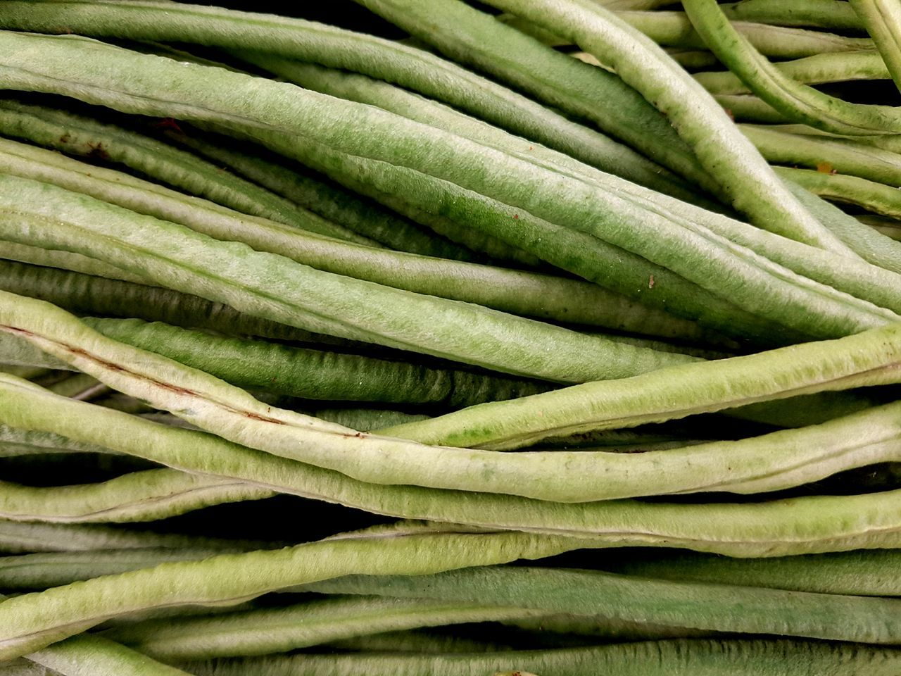 Green Color Full Frame Vegetable Healthy Eating Freshness Abundance Backgrounds Food Close-up Agronomy Agriculture Agricultural Plants Still Life Nature Longbeans