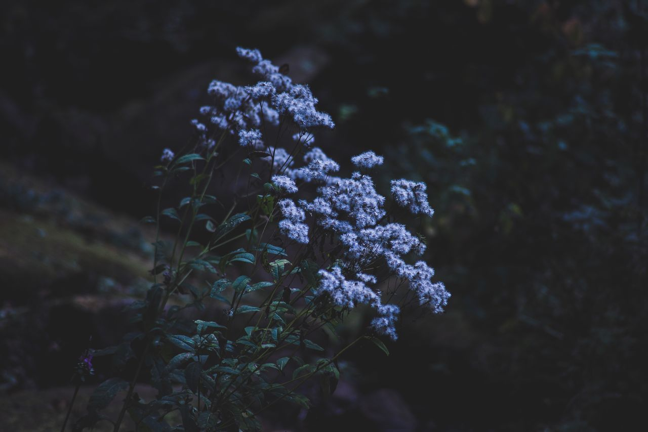 Growth Flower Nature Beauty In Nature Freshness No People Tree Fragility Day Outdoors Lilac Close-up Black Forest Langenwaldsee Freudenstadt Mextures EyeEm Nature Lover EyeEm Best Shots The Week Of Eyeem