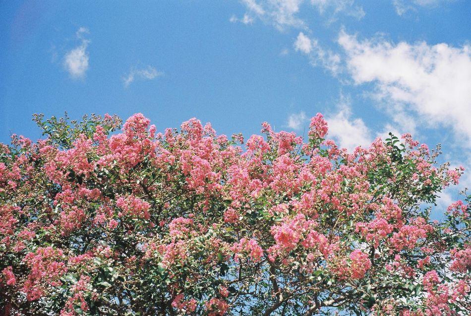 Korea Jeju Island, Korea Jeju JEJU ISLAND  Travel Film Filmcamera Film Photography Happy Green Beauty In Nature Flower Summer Love