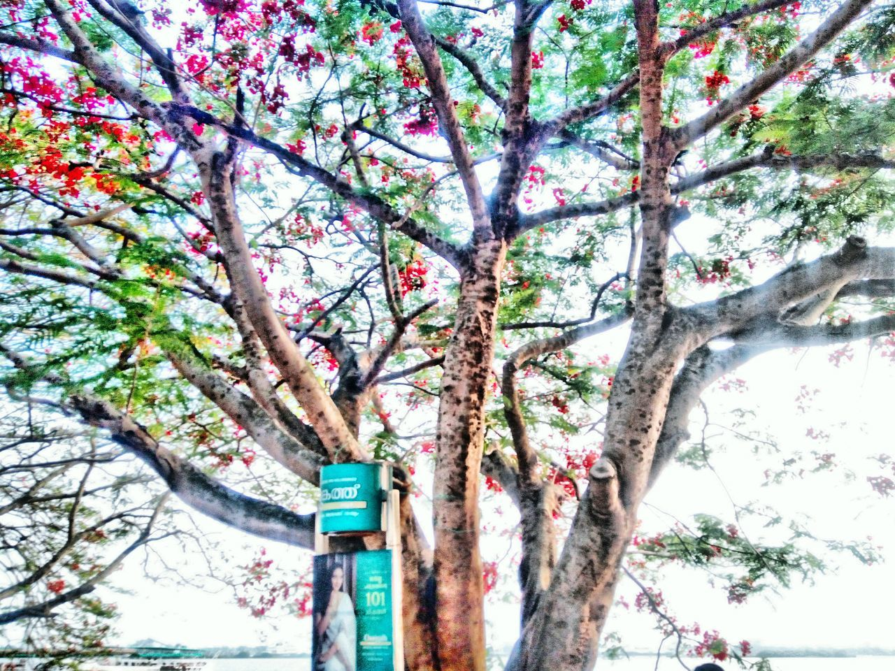 tree, branch, low angle view, growth, tree trunk, day, no people, nature, beauty in nature, outdoors, flower, close-up, freshness, sky