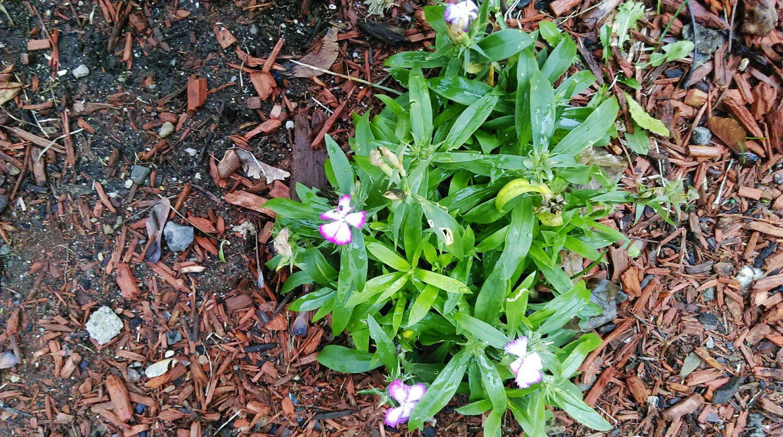 December flowers Hello World First Eyeem Photo