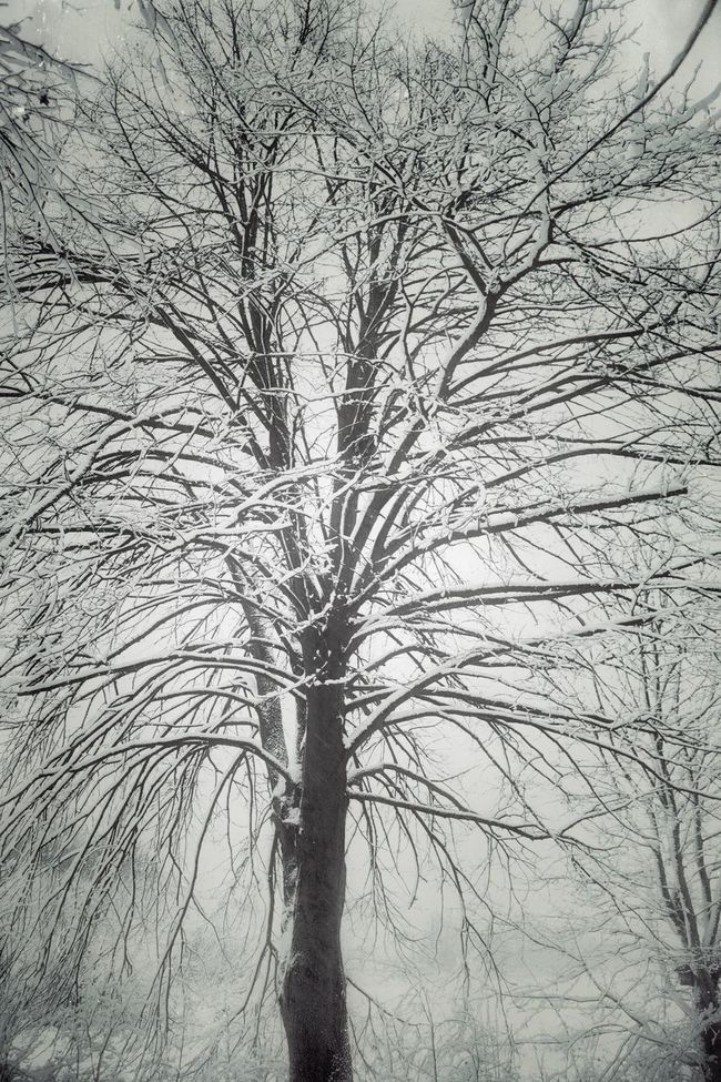 Winter Tree Black & White Black And White Snow Deepfreeze