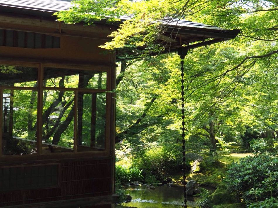 Kyoto Japan Arashiyama Hogonin Temple Garden Green Tree Day Growth Nature Beauty In Nature Outdoors Architecture Water Healing Silence Summer Olympus PEN-F 京都 日本 嵐山 宝厳院 獅子吼の庭 借景回遊式庭園