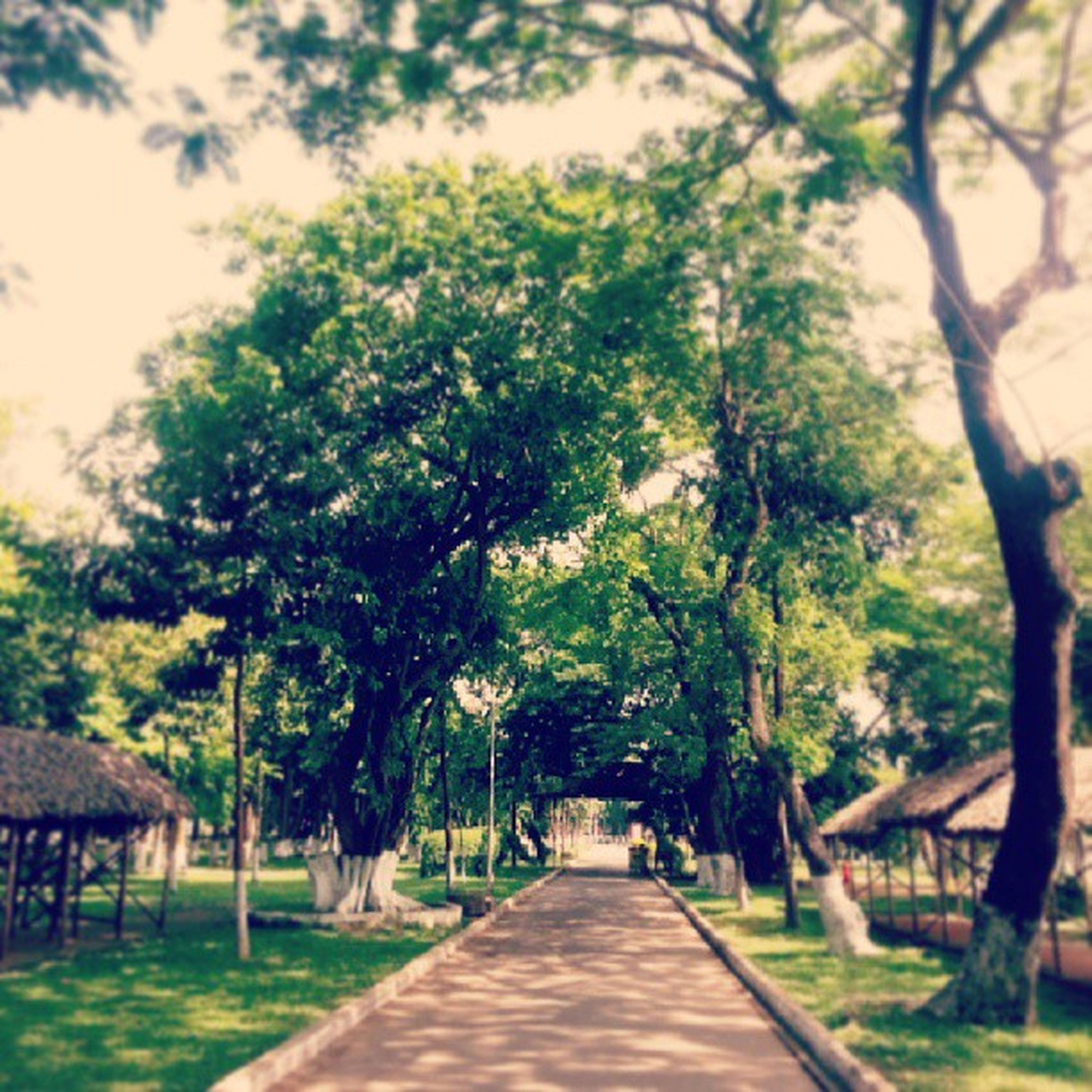 the way forward, tree, diminishing perspective, vanishing point, treelined, footpath, walkway, growth, tranquility, long, empty, nature, narrow, pathway, park - man made space, branch, tree trunk, tranquil scene, road, day