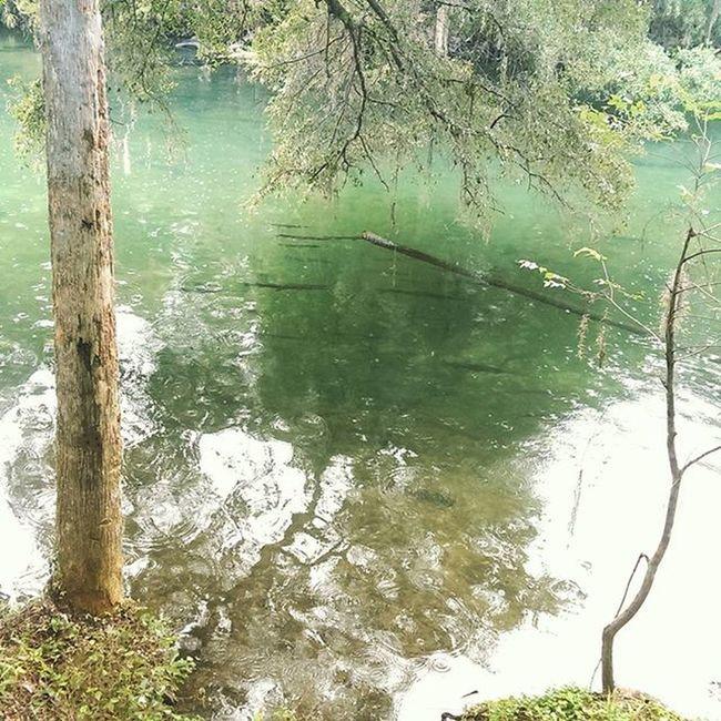 I love nature Manatees Alligators Alligatorgars Garfish