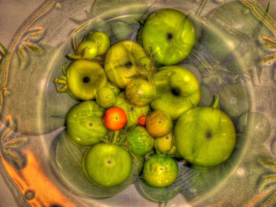 Close-up Day Directly Above Food Food And Drink Freshness Fruit Green Color Green Tomato Green Tomatoes Healthy Eating Indoors  No People Tomato Tomatoes