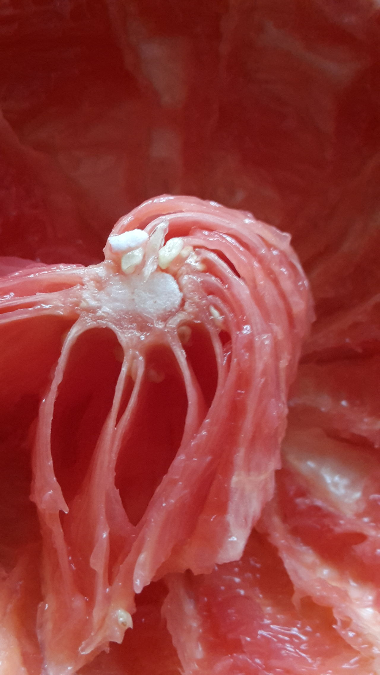 Close-up Food Healthy Eating Grapefruit Obst Pampelmuse