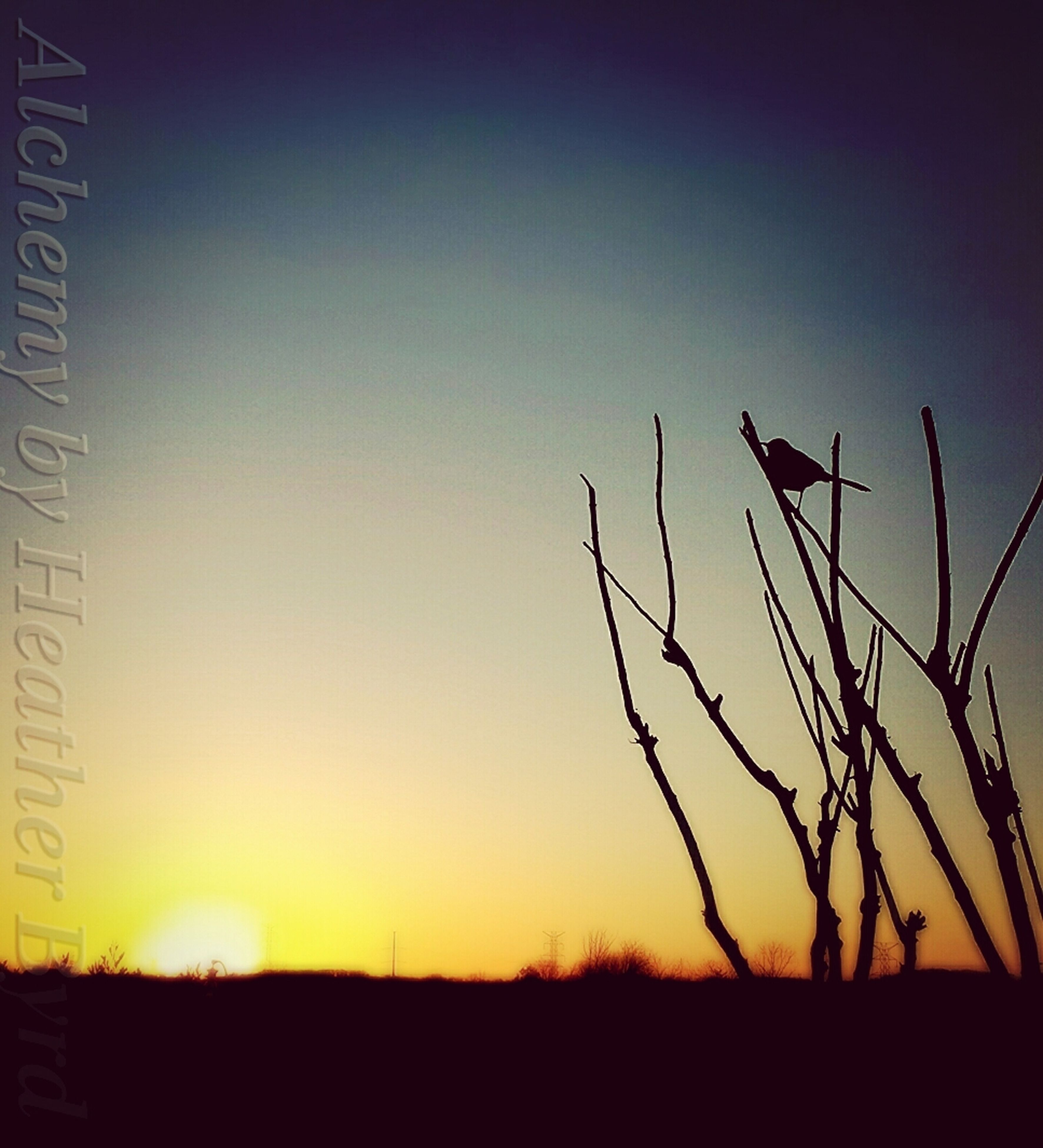 sunset, silhouette, clear sky, landscape, tranquil scene, field, tranquility, copy space, scenics, nature, beauty in nature, orange color, horizon over land, idyllic, dusk, sky, no people, growth, rural scene, outdoors