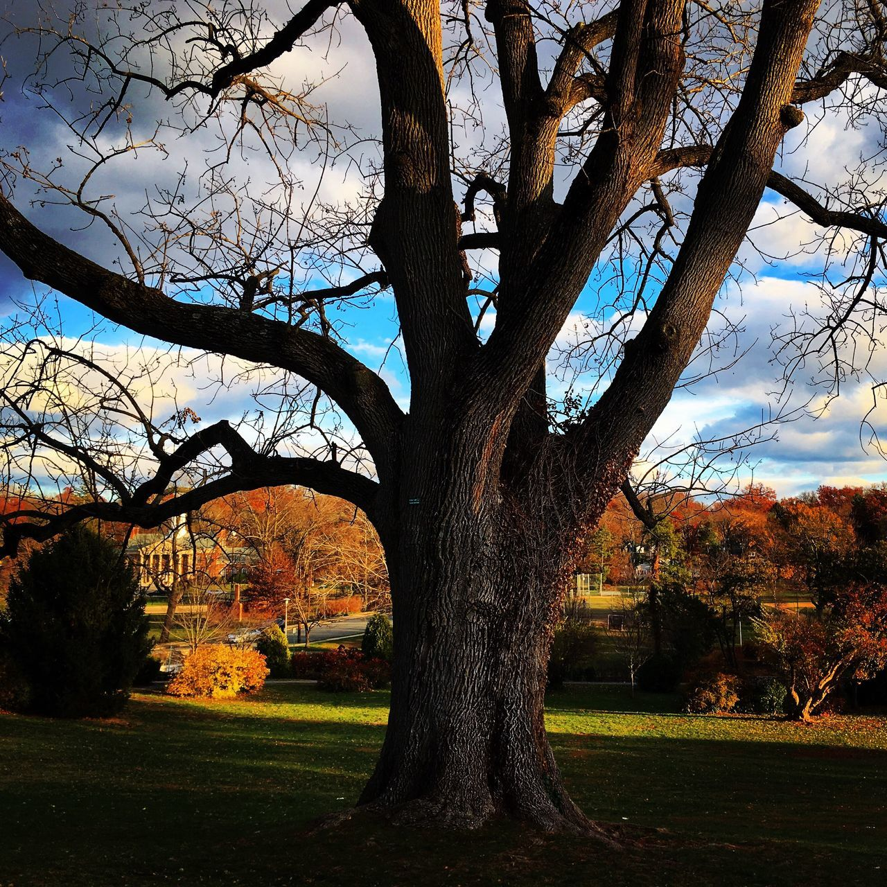 Tree Tree Trunk Nature Branch Outdoors Growth Sky Autumn Bare Tree Beauty In Nature No People Day Single Tree