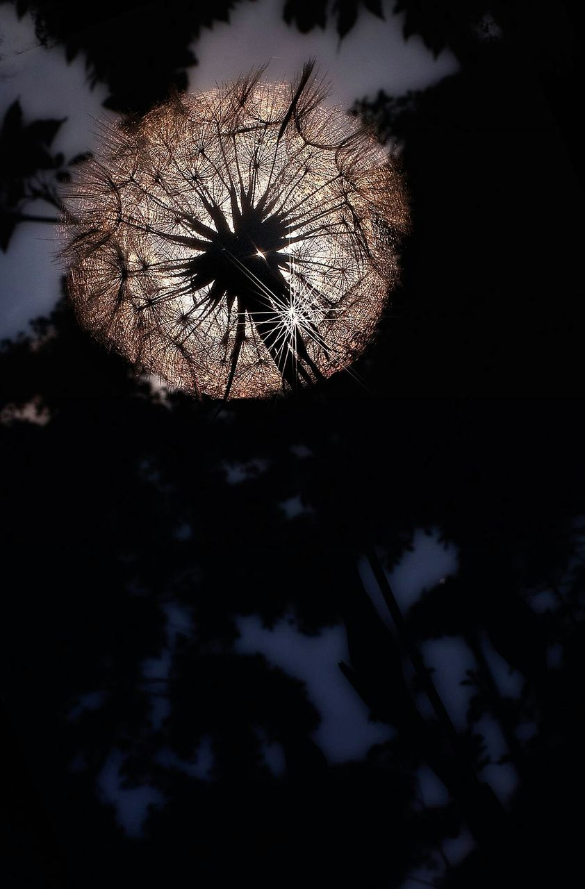 flower, nature, tree, growth, silhouette, beauty in nature, sky, outdoors, no people, night, fragility, flower head