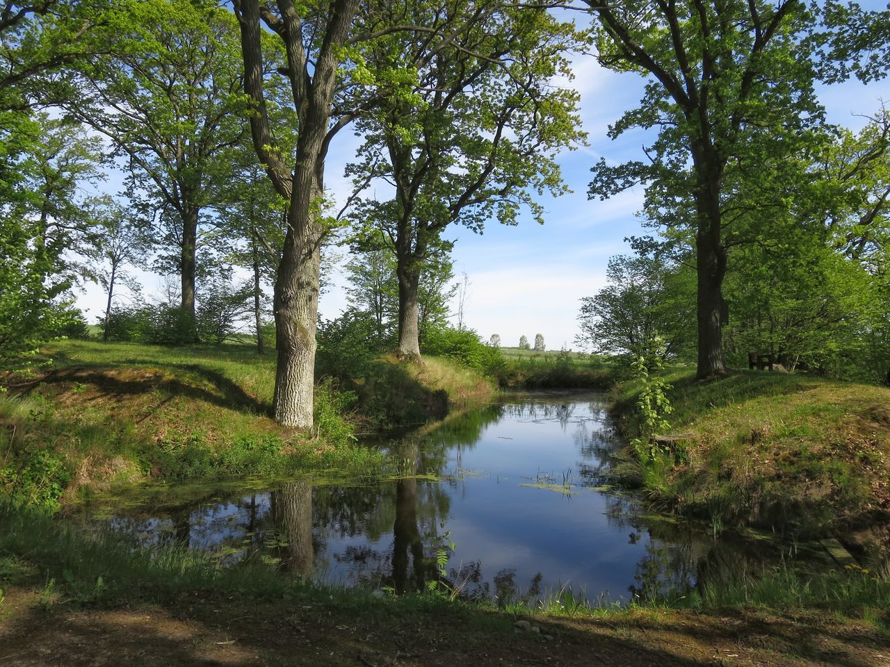 Water Reflection Carp Pond Nature Walking Outdoors Forest Trees Oak Trees