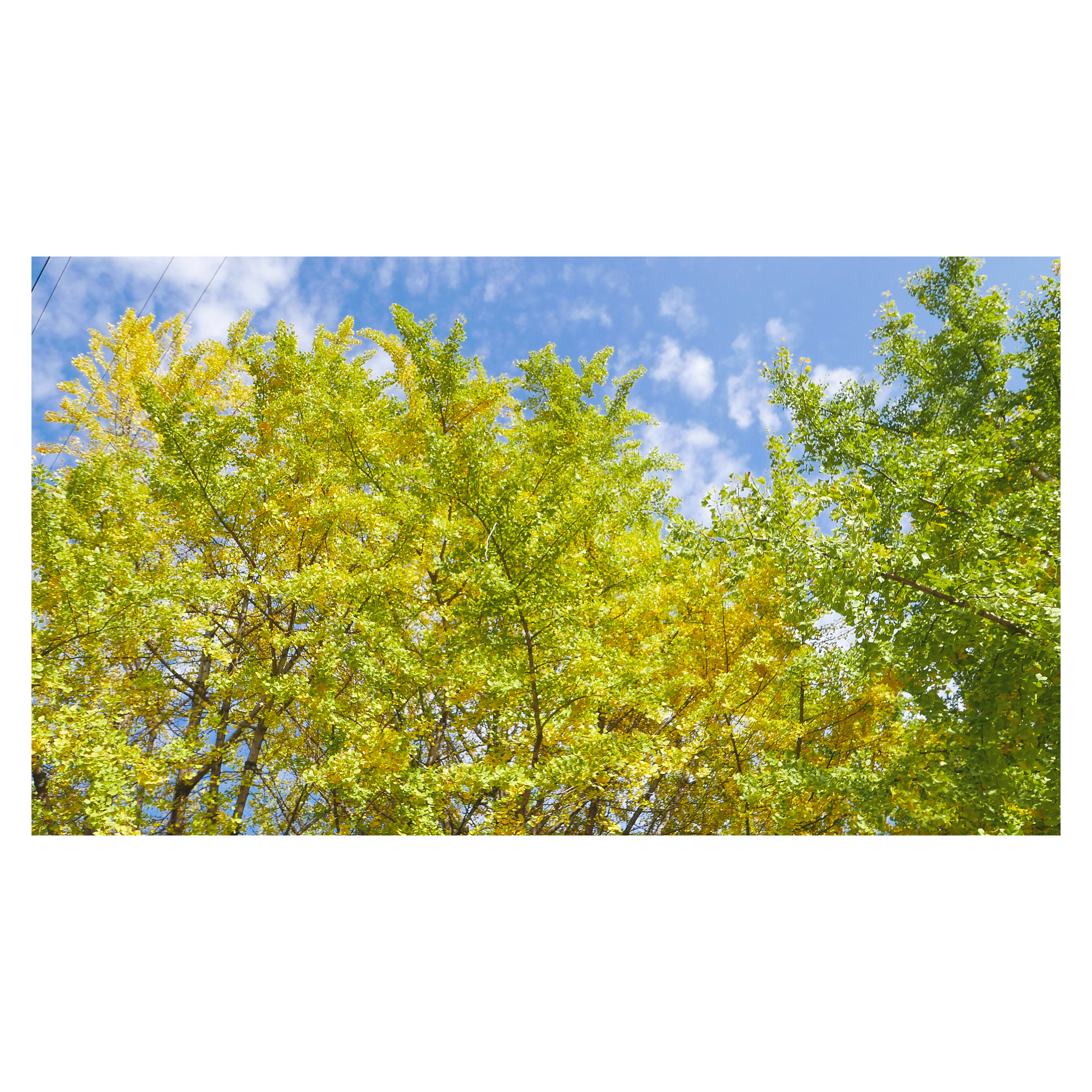auto post production filter, transfer print, tree, growth, blue, sky, green color, low angle view, green, yellow, cloud, nature, beauty in nature, day, field, tranquility, scenics, tranquil scene, outdoors, growing, lush foliage, cloud - sky, treetop, no people, high section, greenery, flowering
