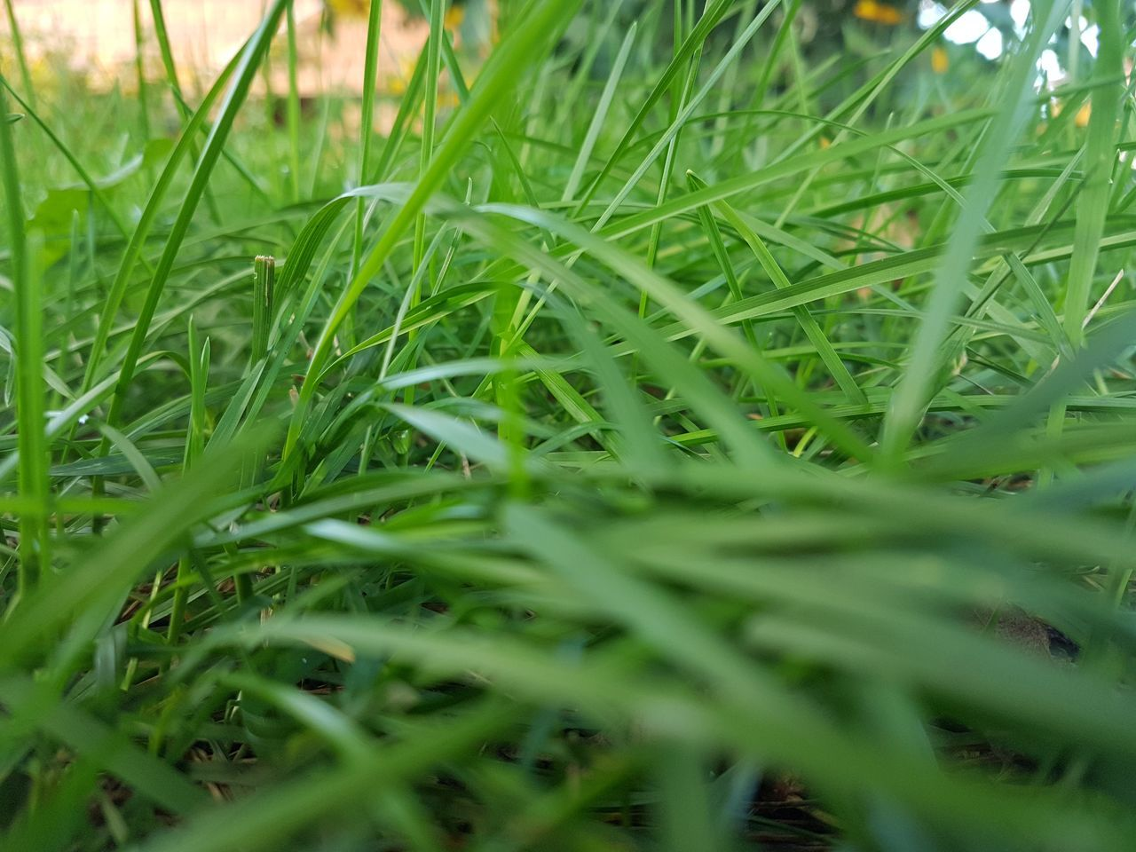 grass, green color, growth, selective focus, nature, field, close-up, no people, day, plant, outdoors, beauty in nature, freshness
