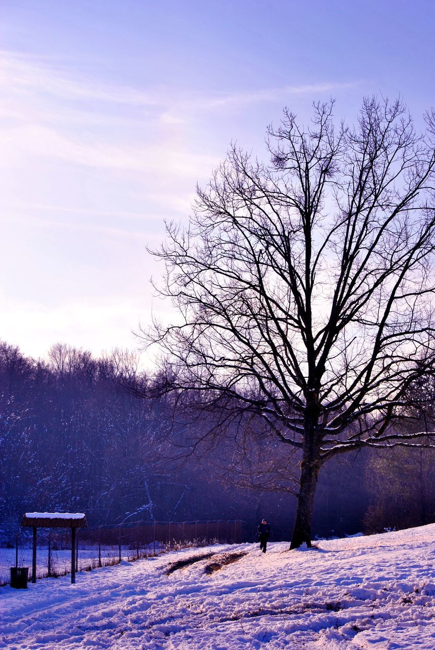winter, snow, cold temperature, bare tree, weather, nature, tree, beauty in nature, landscape, tranquility, sky, cold, outdoors, scenics, tranquil scene, frozen, day, branch, snowing, no people, bleak