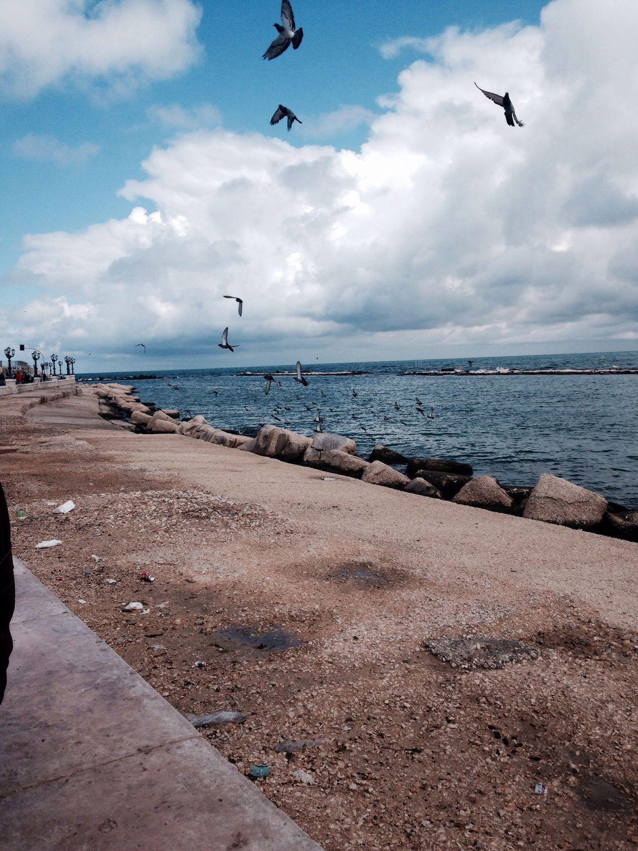All you need. Capturing Freedom Fresh Air Sea Birds