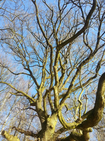 Eye4photography  Low Angle View Tree Sky Clear Sky Nature No People Beauty In Nature Day Bare Tree Eye4photography  EyeEm Best Shots EyeEm Nature Lover Nature The Purist Tree Low Angle View Beauty In Nature Silluettes And Sky