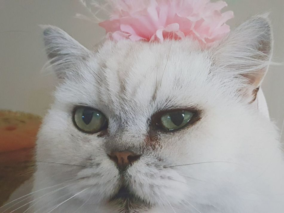 My Cat Freddie Dressing Up Pets