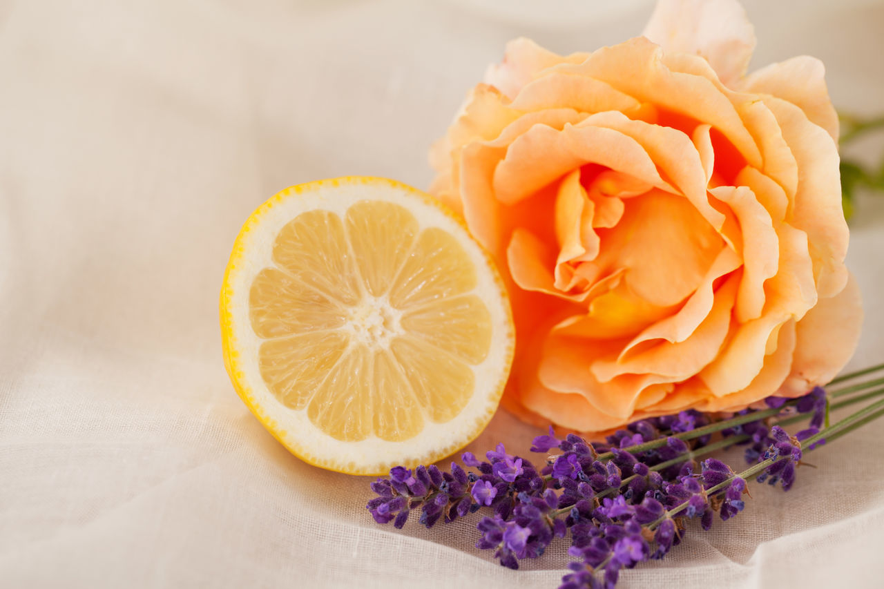 Fresh lavender and rose bloom with lemon half Aromatherapy Copy Space Wellness Beauty In Nature Close-up Day Fabric Background Flower Flower Head Fragility Fragrance Freshness Half Lavender Lemon Nature No People Odor Petal Rose - Flower Smell Spa White Background