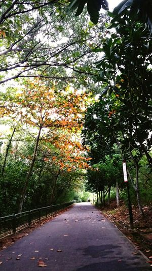 Pavement with trees canopy Nature In Beauty Nature Naturepark Park Trees Treescape Canopy Canopy Of Trees Canopy Walk Summer Autumn Autumn Foliage Pavement Pathway Through Tress Cycling Track Cycling Trail