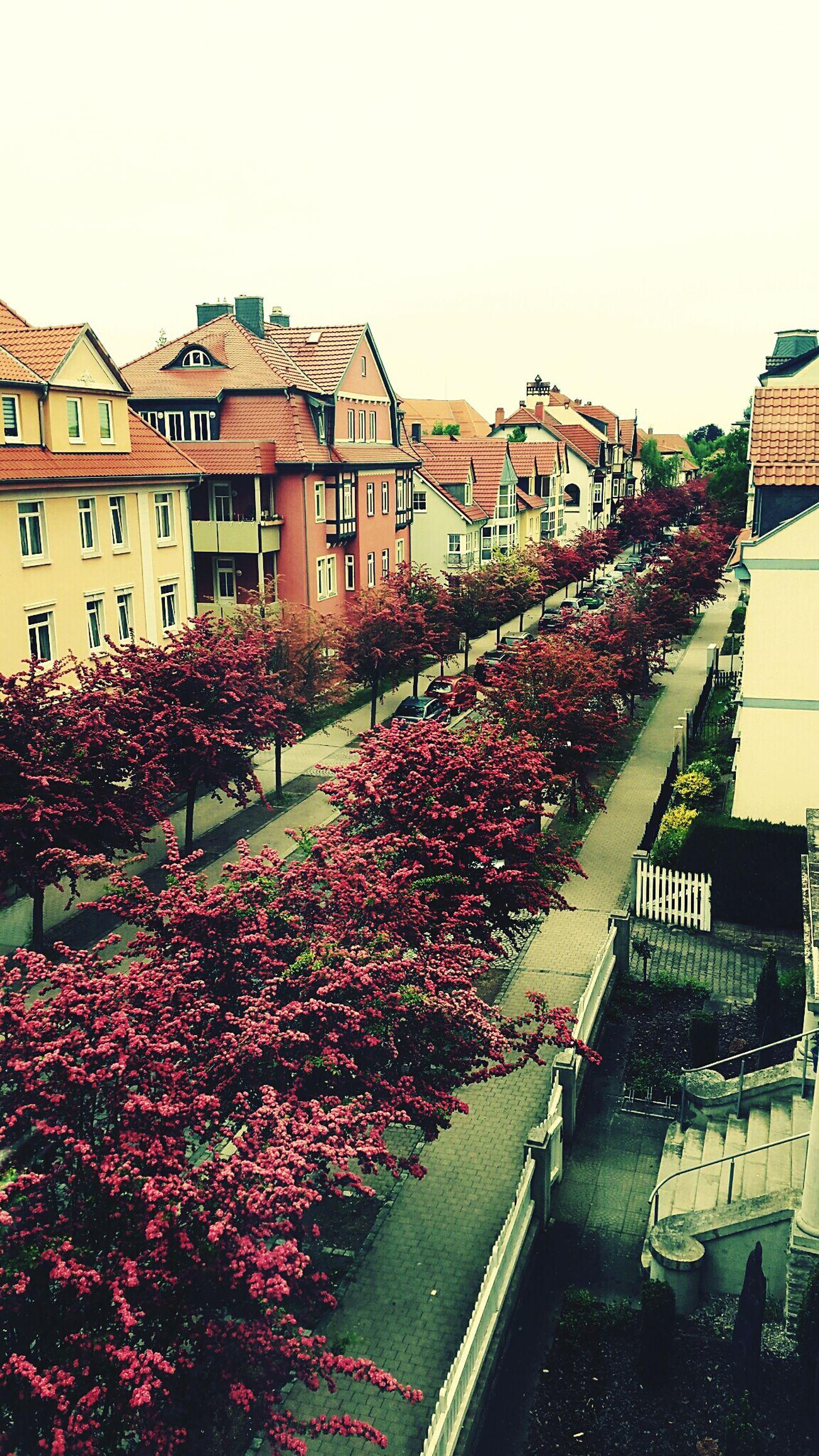 Blick von unserer Wohnung auf die Straße... Streetphotography Street Portrait Street View From The Window...Streetviewphotography View From My Window Streetview TreePorn Tree_collection  Trees TreesInTheCity