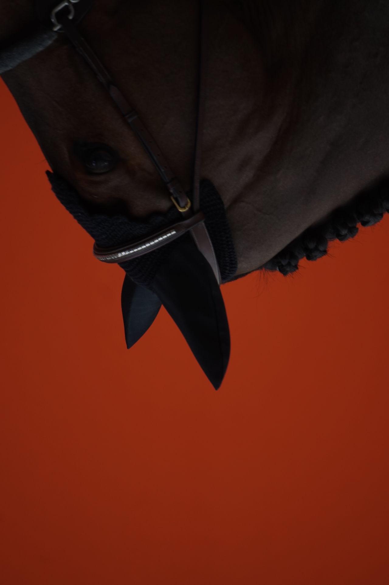 Close-up Detail EyeEmNewHere Horse Orange Piano Moments Profile