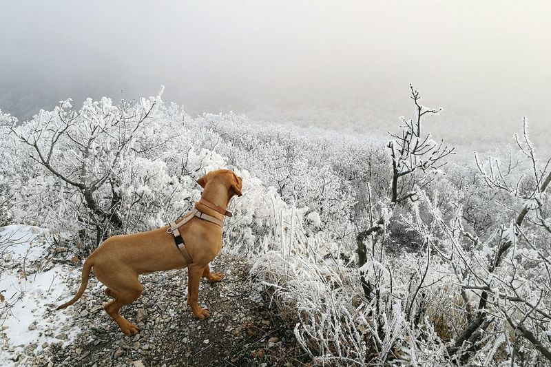 Winter Wonderland Forest Vizslagram Icey❄
