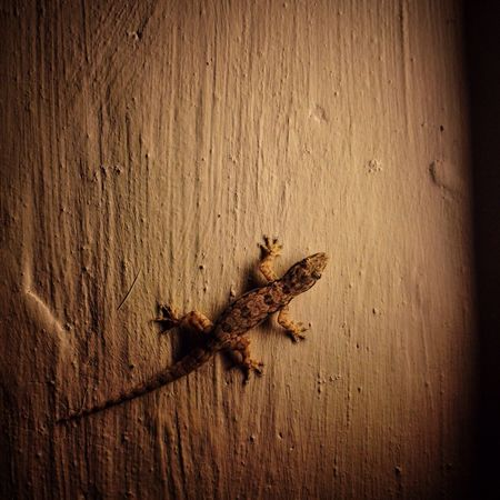 IPhoneography Iphonephotography Lizard Mymodel Placid  Calmness Life EyeEm Best Shots EyeEm Gallery Showcase March