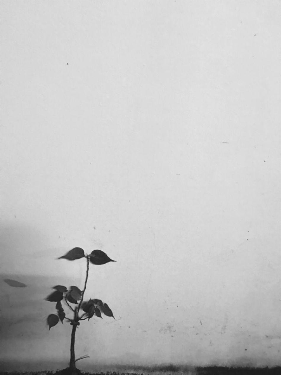 ต้นไม้ริมกำแพง Small Tree Little Things Smart Simplicity Smart Strong Stronger Life Is Go On.. Life Is Beautiful Life Is Good Life Is A Journey Life's Simple Pleasures... Beauty In Nature Buetiful EyeEm Nature Lover EyeEm Best Shots - Nature EyeEmNewHere