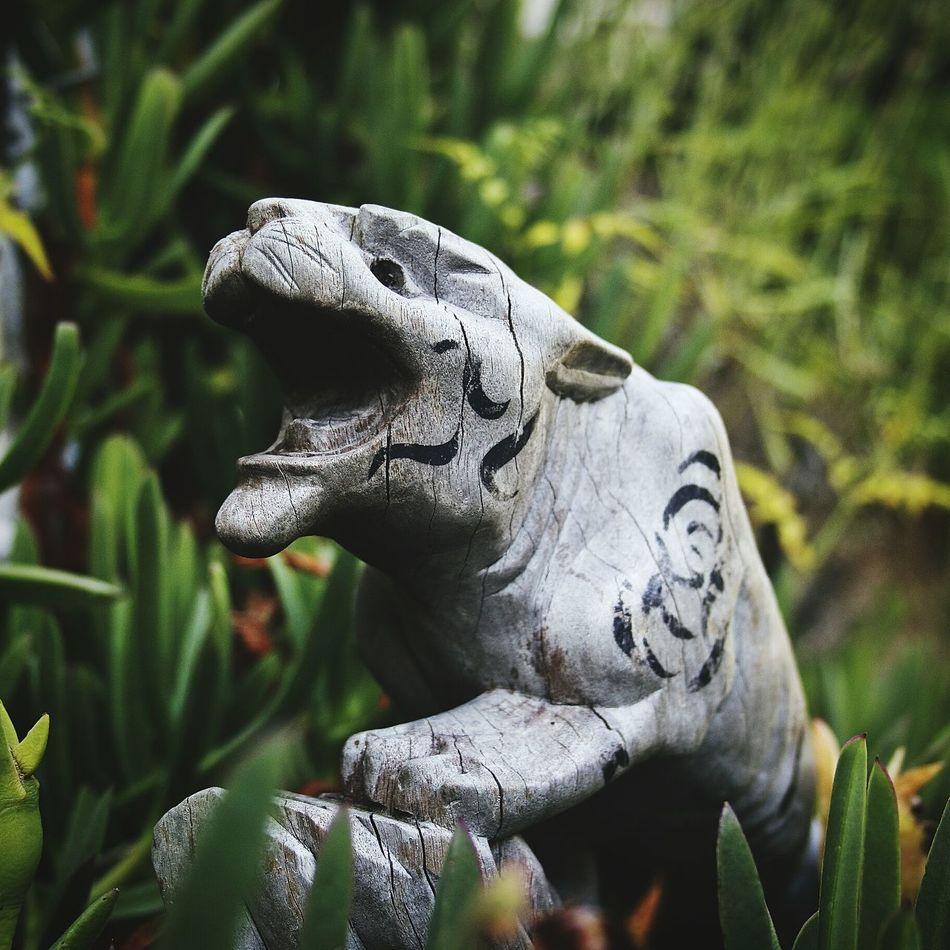 Check This Out Hi! Wooden Texture Amongst The Undergrowth Garden Photography EyeEm Nature Lover Eyeem Garden