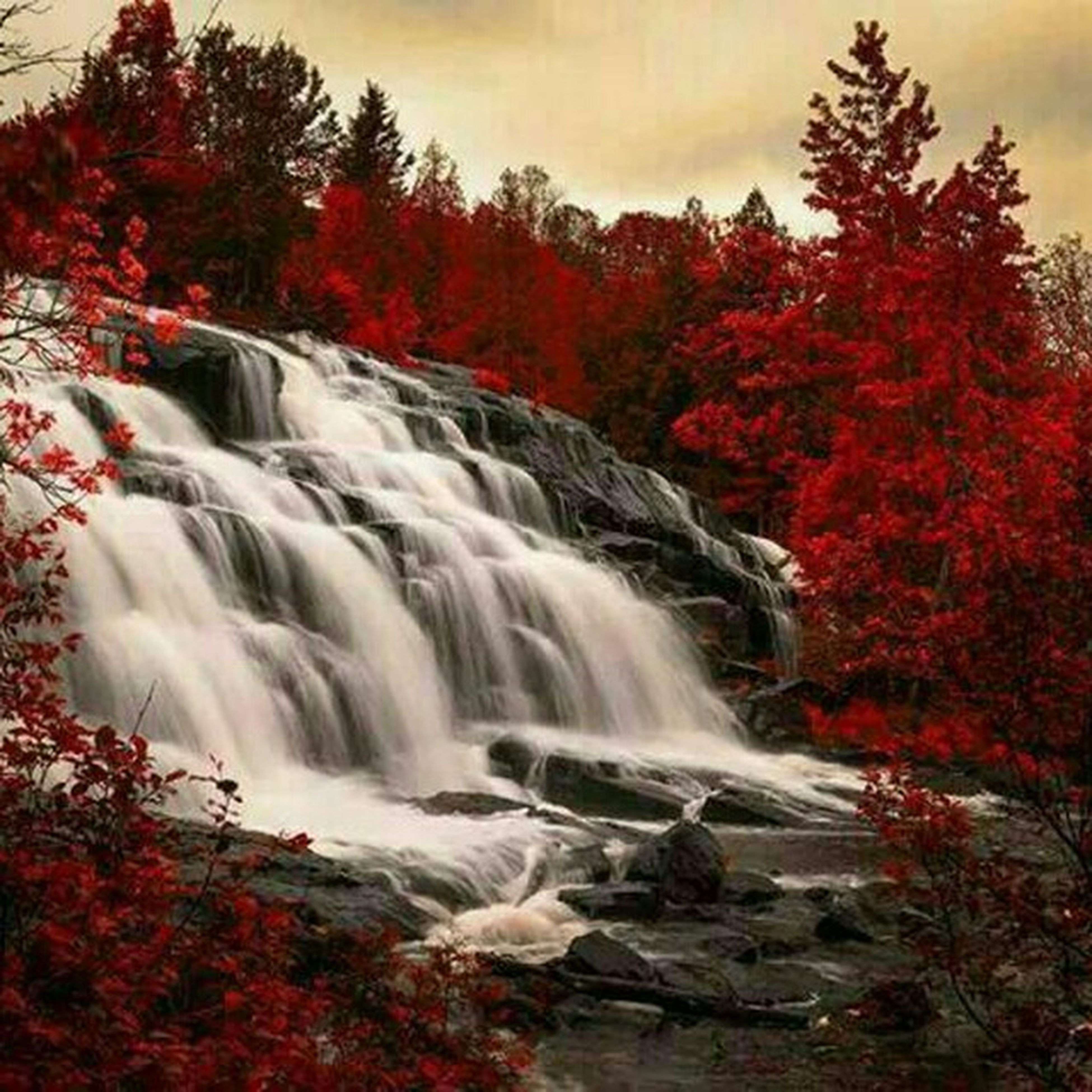 tree, waterfall, flowing water, water, long exposure, motion, beauty in nature, scenics, flowing, forest, nature, autumn, change, red, tranquil scene, growth, tranquility, blurred motion, rock - object, idyllic