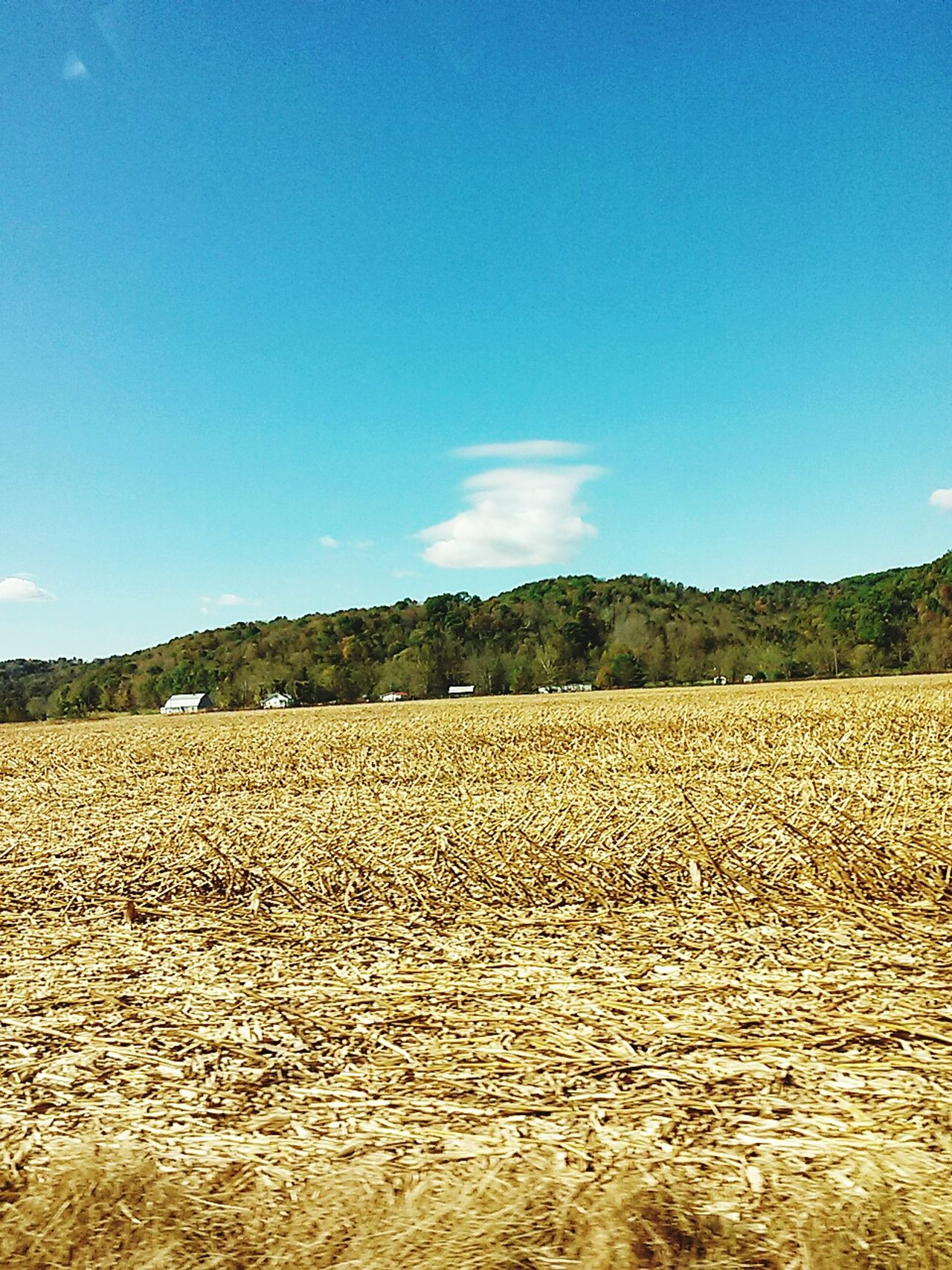 clouds Clouds And Sky Fields Of Gold Fall Colors Fall Time Farm Crops sky Sky And Clouds Taking Photos Hanging Out Hi! Relaxing