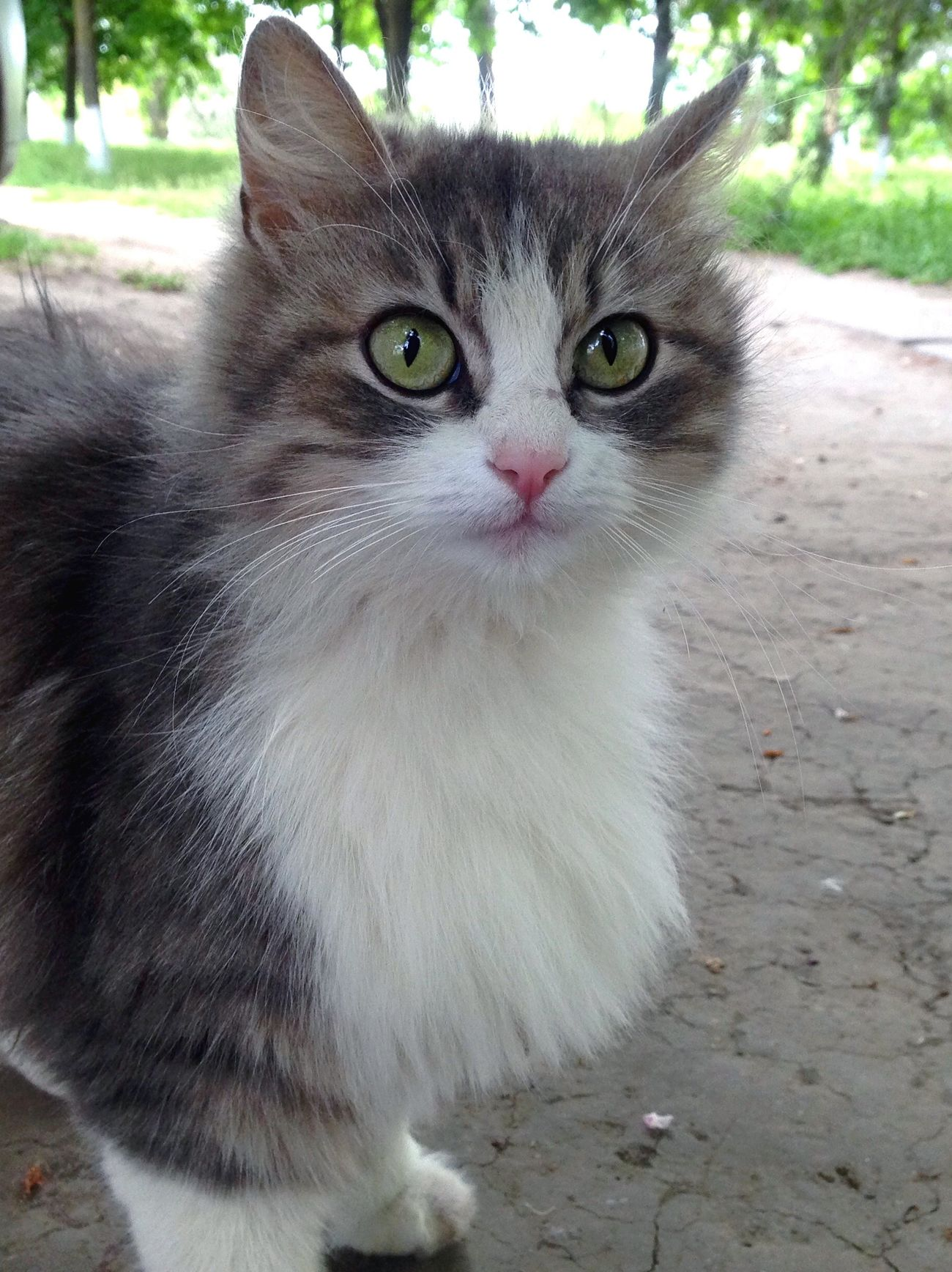 Cats 🐱 Cats Of EyeEm Cat♡ Cats Cat Cat Lovers Homeless Cats Коты Котик котэ кот