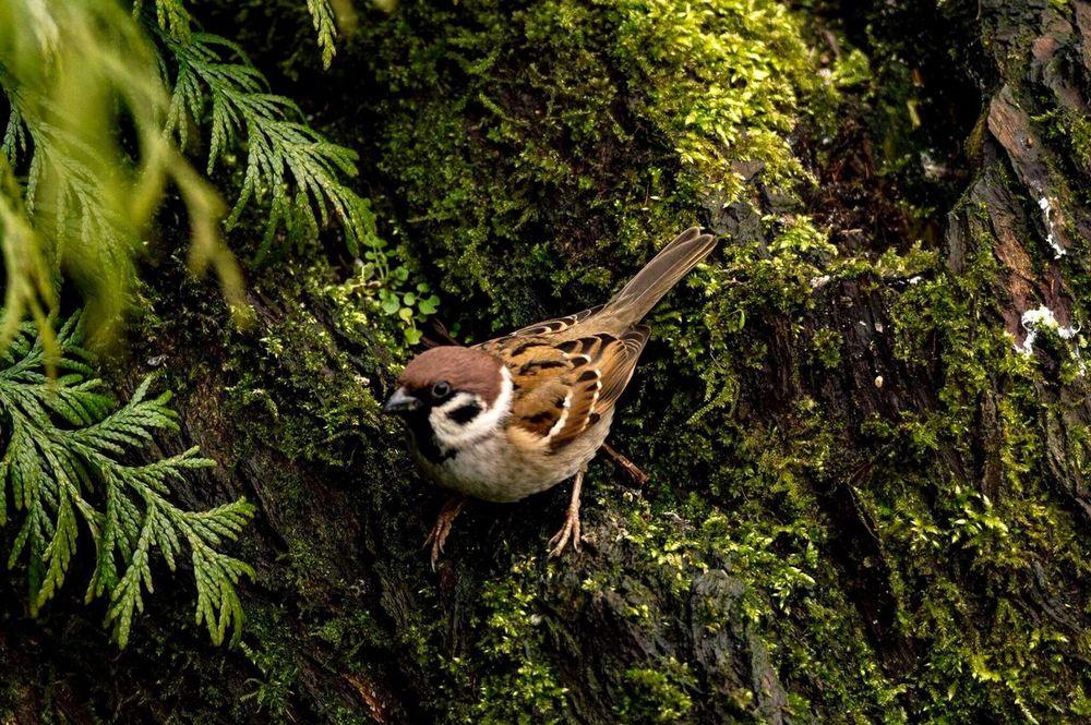 Birds Birdwatching Birds Of EyeEm  Birds🐦⛅ Birdporn Birds And Branches