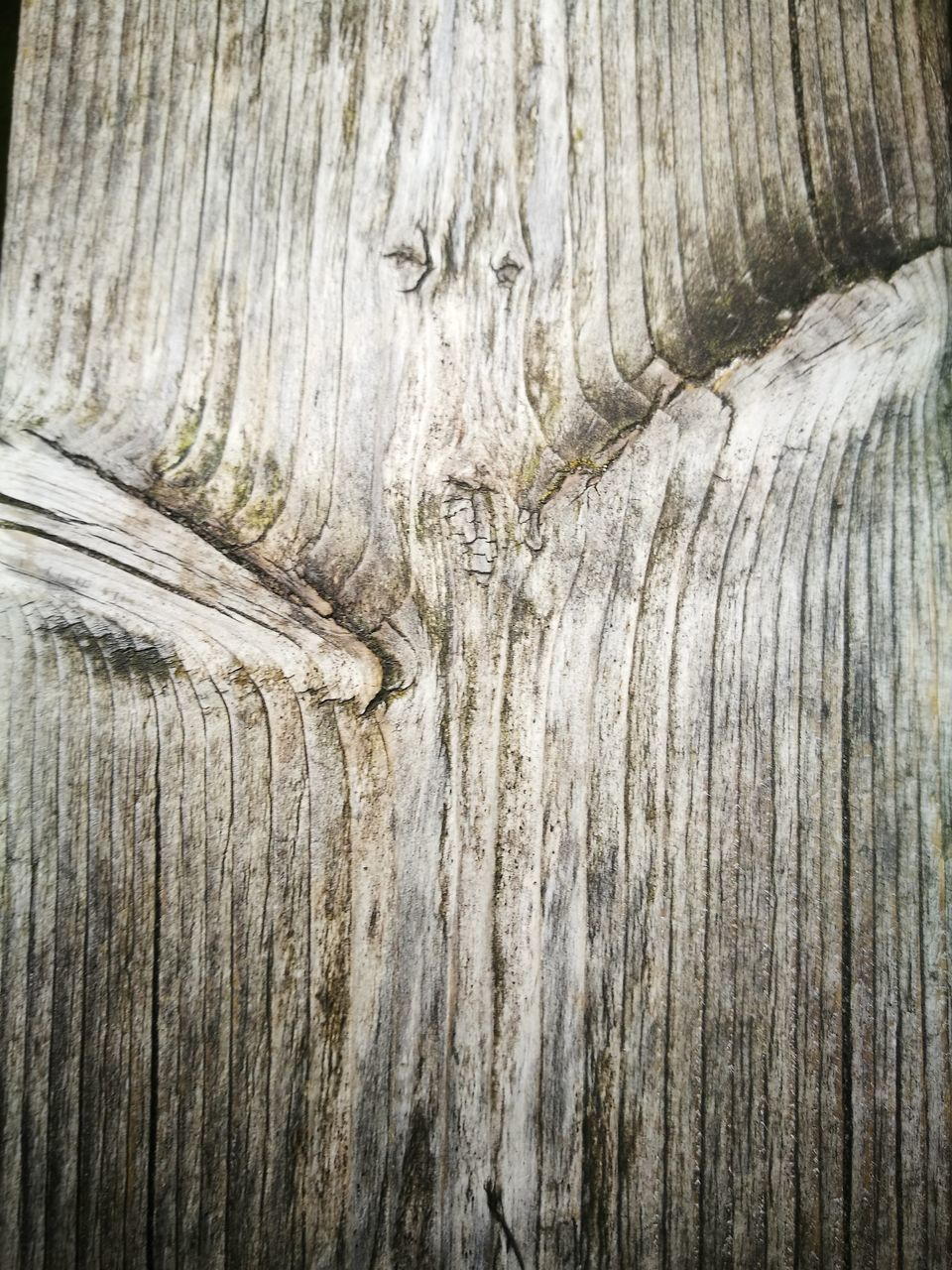 textured, backgrounds, wood - material, pattern, close-up, textured effect, abstract, weathered, nature, rough, full frame, wood grain, knotted wood, no people, outdoors, hardwood, day