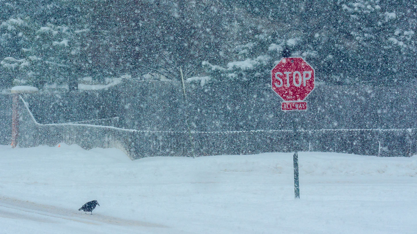 Cold Temperature Crow Road Road Sign Snow Snowstorm Street Weather White Winter My Favorite Photo