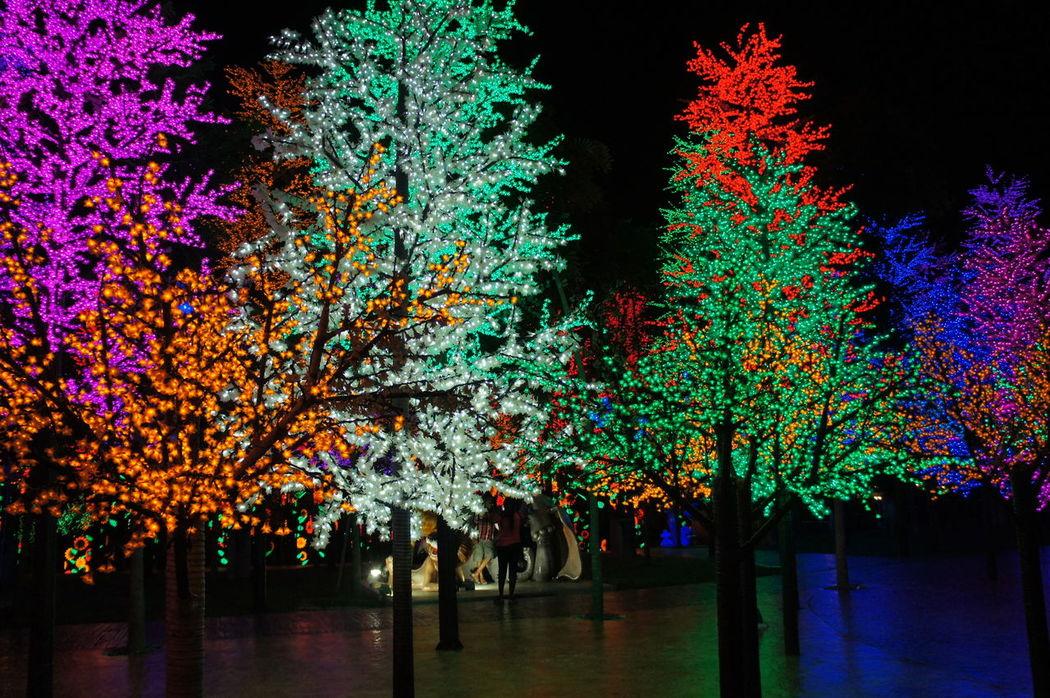 Beauty In Nature Celebration Christmas Christmas Lights Illuminated LED Lighting Led Lights  LED Tree Night Outdoors Tree EyeEmNewHere EyeEmNewHere