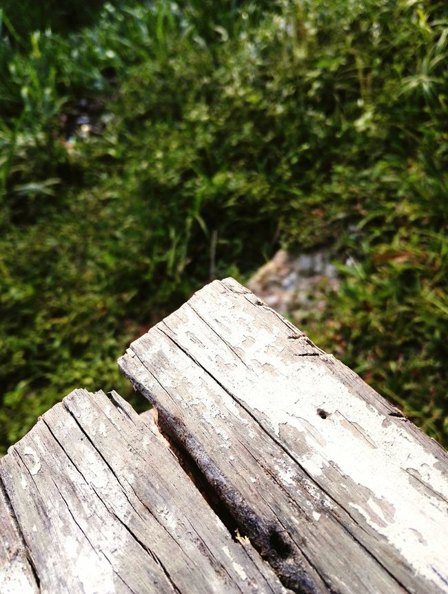 Dramatic Angles Wooden Wood - Material Focus On Foreground Close-up Forest Plank Nature Weathered Growth Tranquility Day Outdoors Green Color Tranquil Scene No People Non-urban Scene